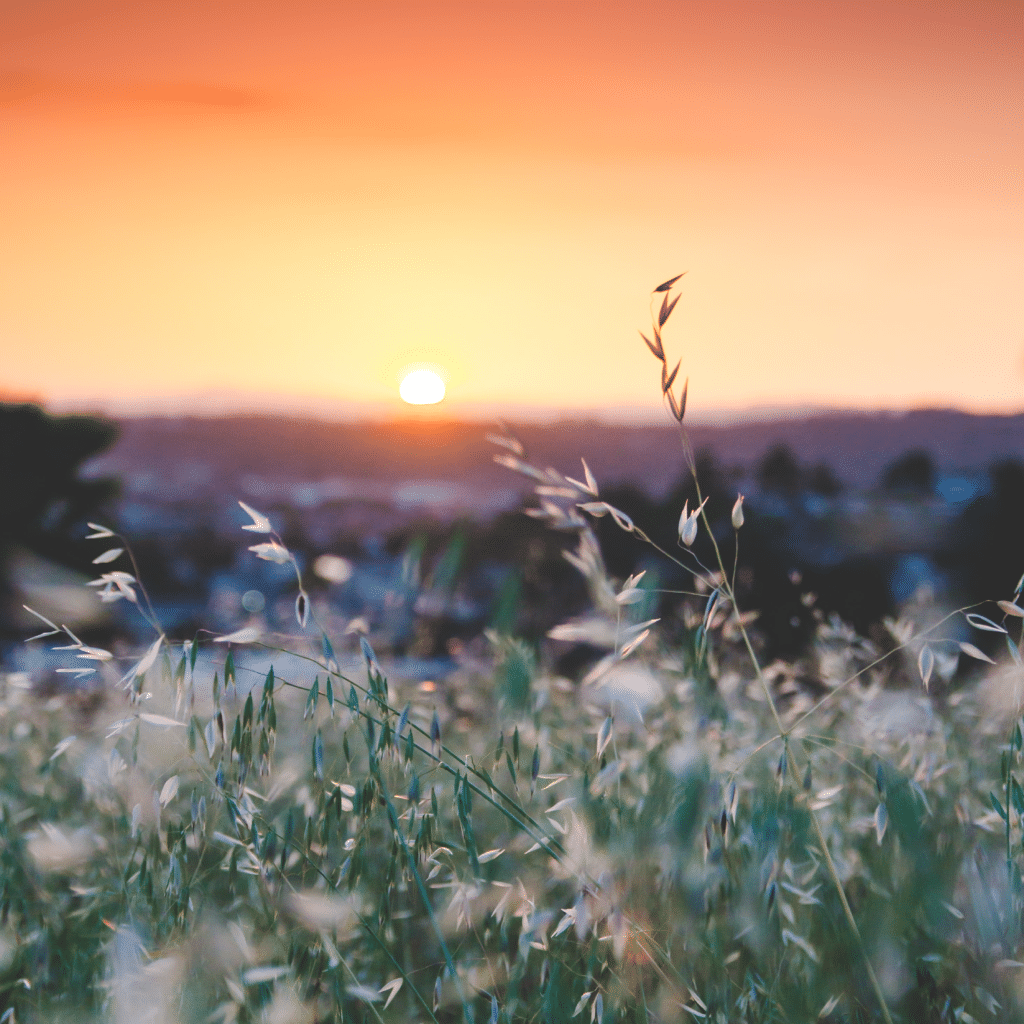 A beautiful orange and yellow sunset with a foreground of grass and weeds.